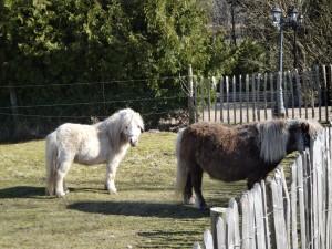 Två ponnyer i Maglö