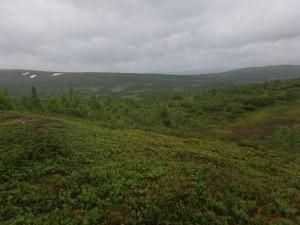 Grönt landskap vid Lillfjället